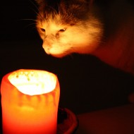 cat-sniffing-candle-190x190